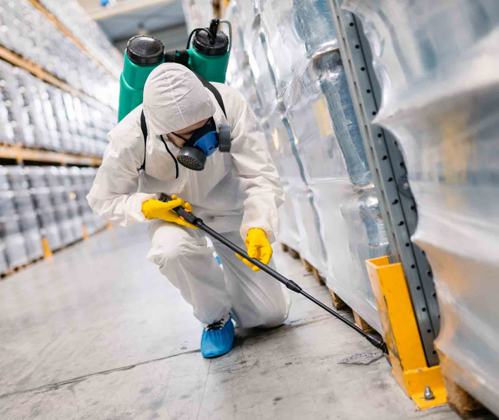 Indications You May Need Pest Control In Castlemaine - Pest Control